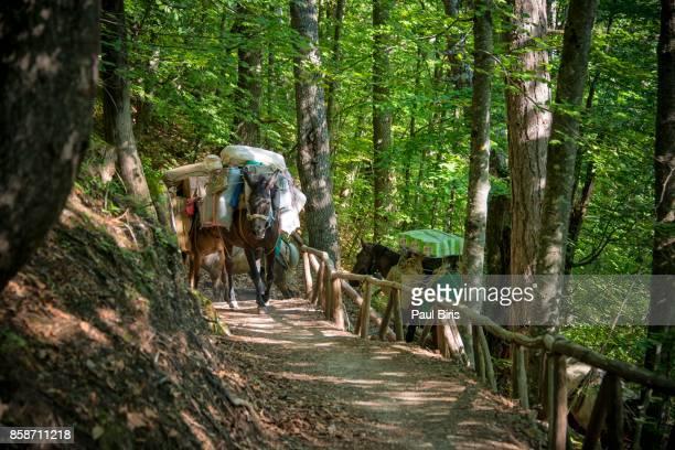 Donkeys climb the track on Mount Olympus, Grecce