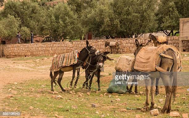 Donkeys fighting