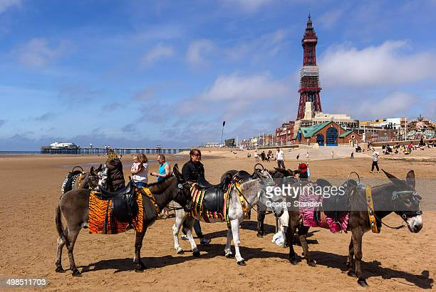 Donkeys in Front of Blackpool Tower
