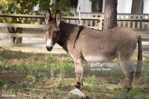 Donkeys living in semifreedom