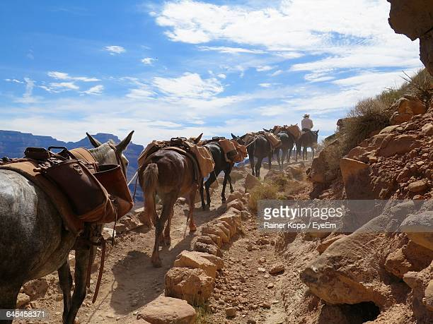 Donkeys On South Kaibab Trail Against Sky