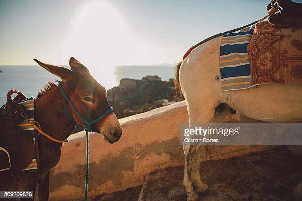 donkeys - bortes stock photos and pictures