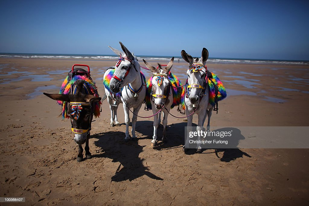 Donkeys stand on an empty beach after it was announced that a refurbishment grant for the iconic Blackpool Tower is to be axed by the government on May 24, 2010 in Blackpool, England. Chancellor George Osborne has announced that Blackpool Tower's 8 million GBP refurbishment payout is to be axed to help cut the UK�s 156 billion GBP budget deficit.