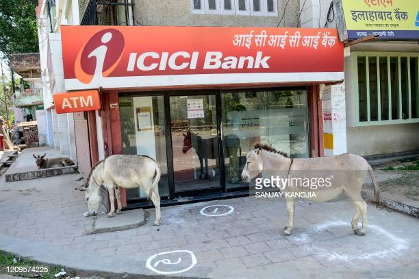 Donkeys stand outside an ATM booth during a government-imposed nationwide lockdown as a preventive measure against the COVID-19 coronavirus, in...