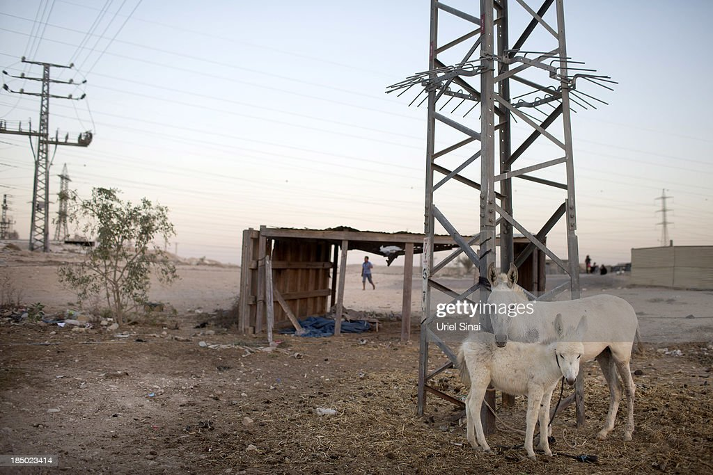 Donkeys stand tied to a pylon on October 10, 2013 in the Bedouin village of Wadi Al Na'am, Israel. Roughly 200,000 Bedouins live in the Negev desert, with about half living in the seven Israeli government built townships in the northeast of the Negev and half in unrecognized villages, which lack basic services such as clean water, electricity or sanitation. The Israeli Parliament (Knesset) is set to bring a final vote on the Prawer-Begin Bill during its winter session, which starts this week. If implemented the law would forcibly displace tens of thousands of Arab Bedouin citizens living in the unrecognized villages and see them settled in the seven Bedouin townships. The Negev Bedouin tribes have vowed to fight the proposed law, which they argue will dispossess them of their homes and force a final settlement to their claims of historical rights to the land.