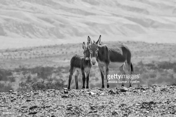 Donkeys Standing On Field