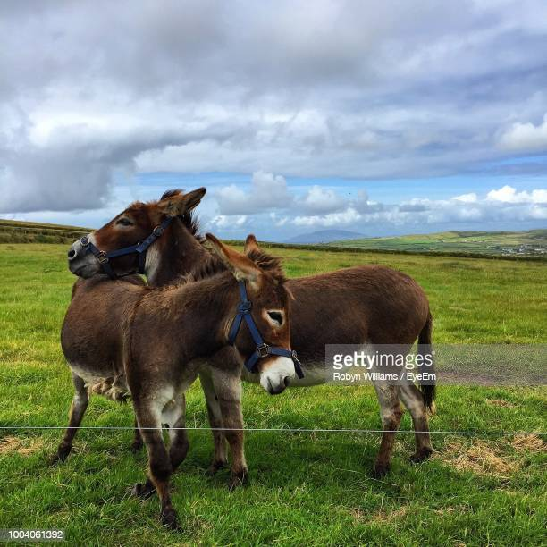 Donkeys Standing On Grassy Field Against Cloudy Sky