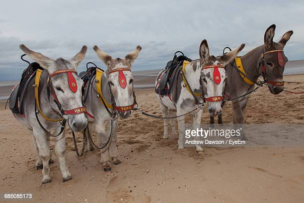 Donkeys Standing On Sand At Beach Against Cloudy Sky