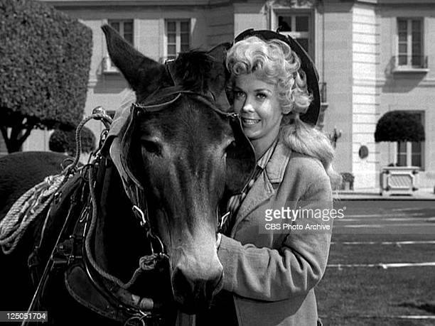 Donna Douglas as Elly May Clampett in THE BEVERLY HILLBILLIES episode Granny's Garden Original airdate October 9 1963 Image is a frame grab