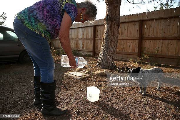Donna Johnson pours water into a dog's bowl on April 23 2015 in Porterville California Over 300 homes in the California central valley city of...