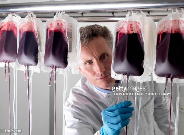 donor blood processing - blood bag stock pictures, royalty-free photos & images