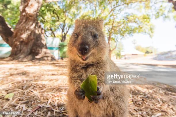 don't it make you smile - perth austrália imagens e fotografias de stock