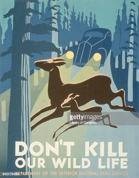 Don't Kill Our Wild Life Poster