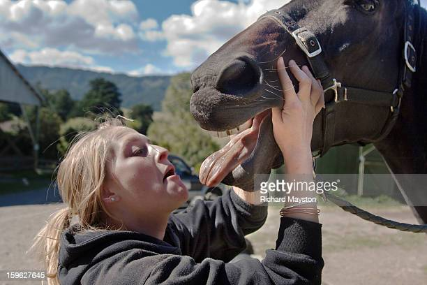 Looking a gift horse in the mouth getty images dont look a gift horse in the mouth negle Choice Image