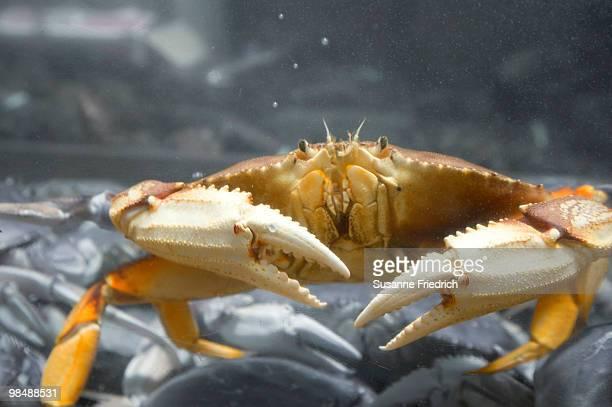 Doomed Crab