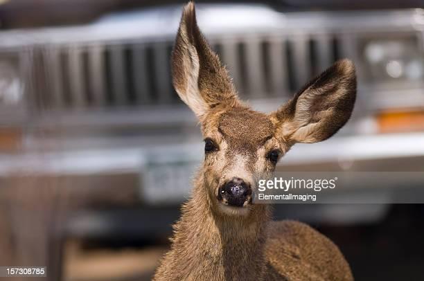 Behandelt Deer