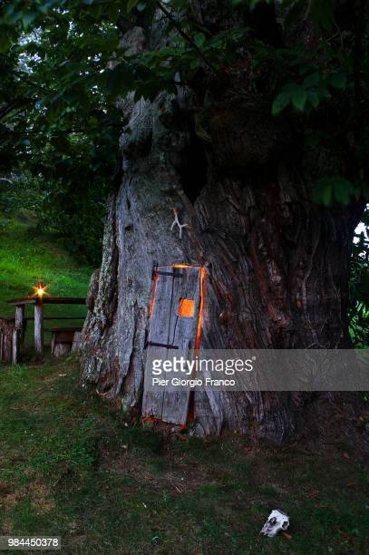 a door in a tree in italy. - magic doors stock pictures, royalty-free photos & images