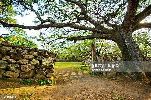 door of old corral - parque nacional de santa rosa fotografías e imágenes de stock
