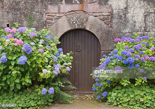 door with hydrangeas, brittany