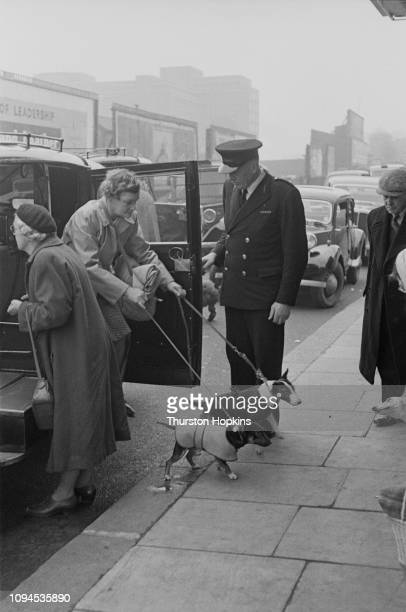 A doorman welcomes two Miniature Bull Terriers and their owner to Crufts dog show held at the Grand Hall Olympia London 8th9th February 1952 Original...