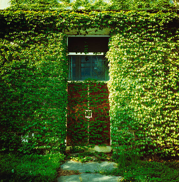 Doors Covered by Ivy