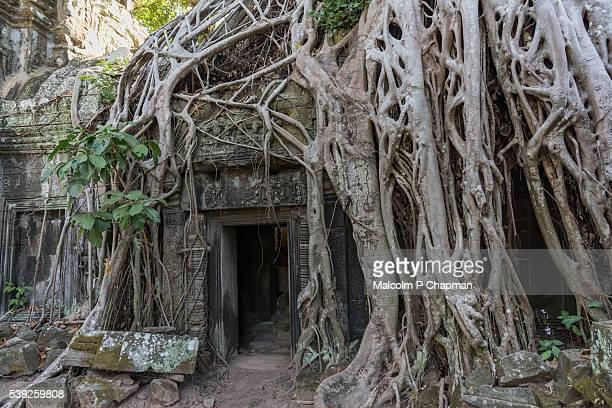Doorway at Ta Prohm Temple in Ankgor, Siem, ReapCambodia