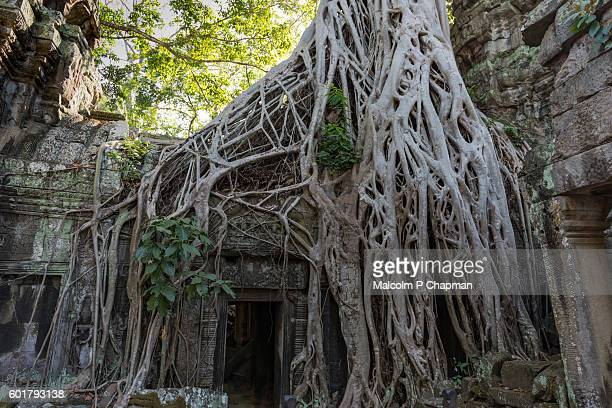 "doorway at ta prohm temple, rajaviharain or jungle temple, angkor, siem reap, cambodia - cambodia ""malcolm p chapman"" or ""malcolm chapman"" stock pictures, royalty-free photos & images"