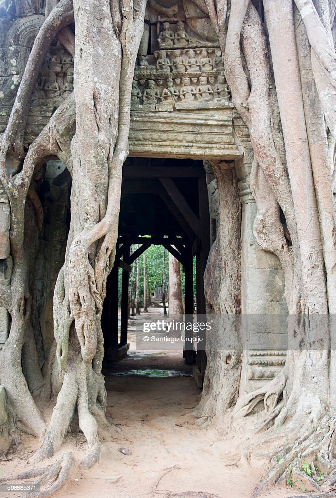 Doorway engulfed in tree roots at ruined Ta Prohm : Stock Photo