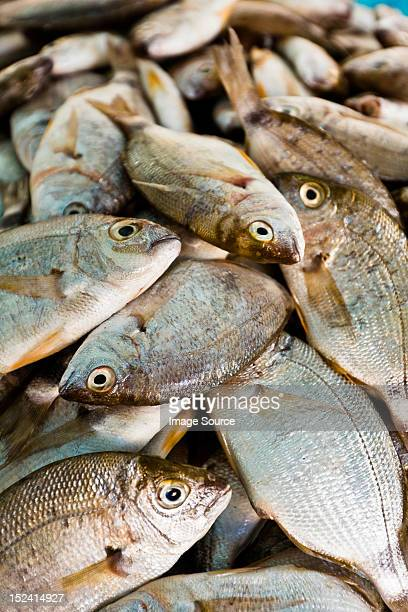 dorade at fish market, houmt souk, djerba, tunisia - djerba stockfoto's en -beelden