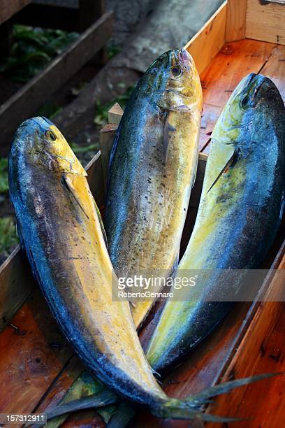 dorado fishes - dolphin fish stock photos and pictures