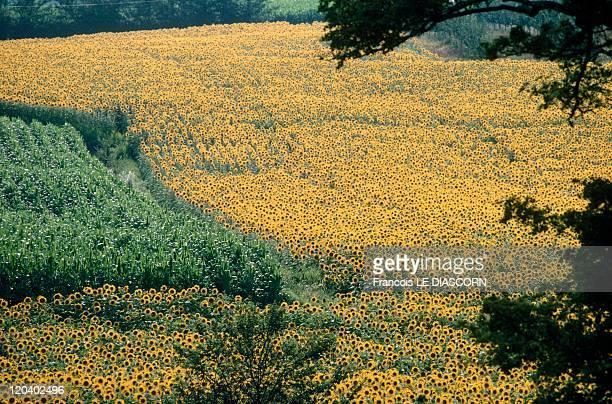 Dordogne France Yellow and green fields near Castillones