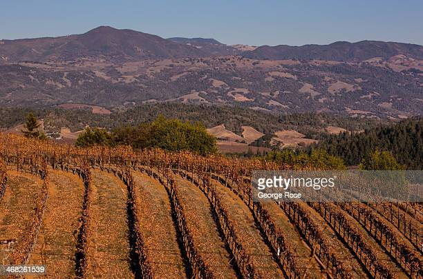 A dormant Dry Creek Valley hillside cabernet sauvignon vineyard awaits pruning on December 5 near Healdsburg California With 2013 the driest year in...