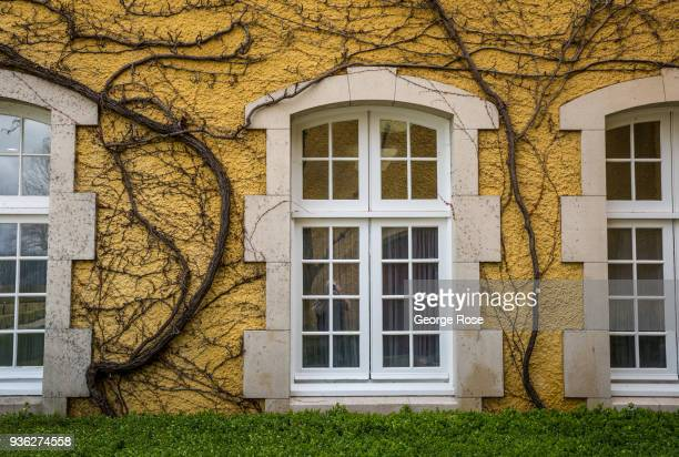 Dormant ivy covering a wall at Jordan Vineyards Winery is viewed on March 9 near Healdsburg California Following a dry winter a series of early...