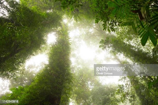high dorrigo plateau is magnificent subtropical