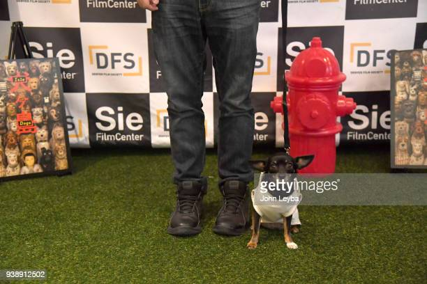Dory poses for a photo during the Sneak preview of Wes Andersons new film Isle of Dogs the screening was BYOD or Bring Your Own Dog on March 26 2018...