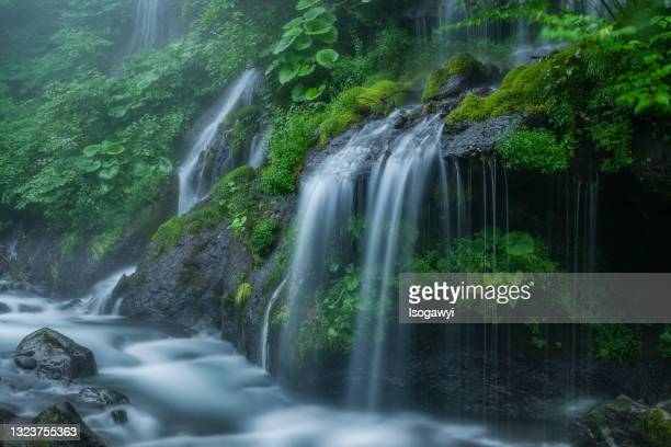 doryu-falls in mist - isogawyi stock pictures, royalty-free photos & images