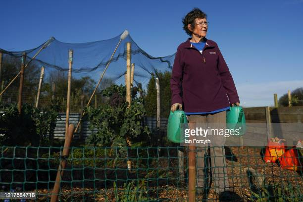 Dot Taylor prepares to water her asparagus as she tends to her allotment and follows government guidelines on social distancing and time restrictions...