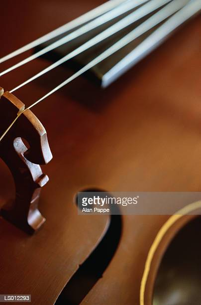 Double Bass, close-up