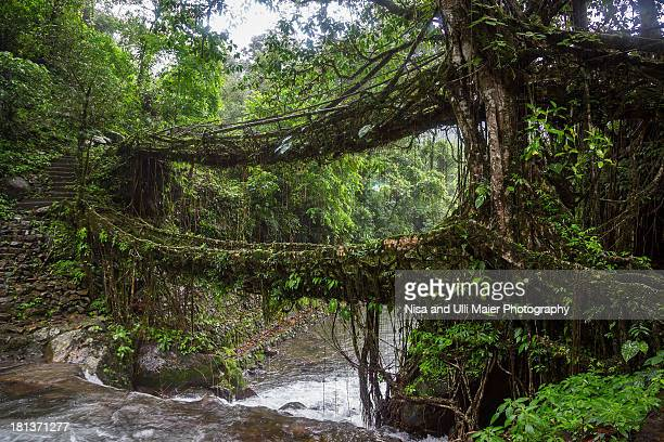 Double Decker Root Bridge in Meghalaya, India.