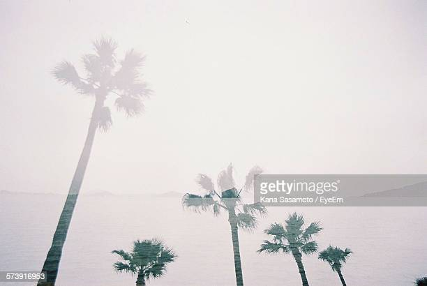 Double Exposure Image Of Palm Trees And Sea Against Sky