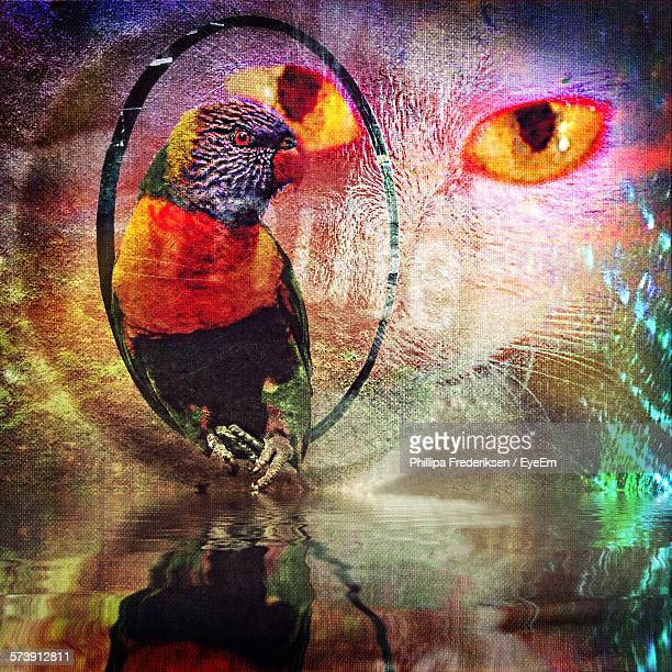 Double Exposure Image Of Parrot And Cat With Reflections