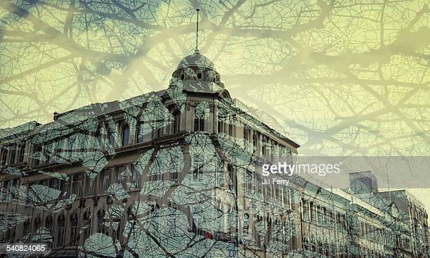 Double exposure of a city building and branches