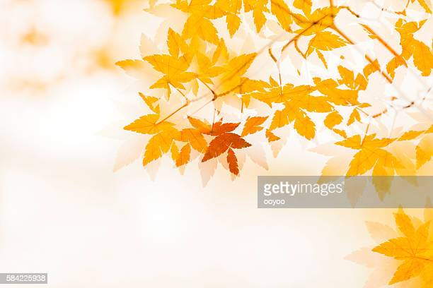 double exposure of autumn leaves - fall background stock photos and pictures