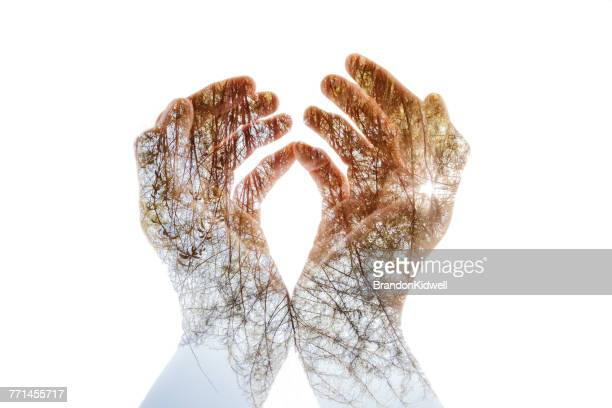 double exposure of hands grasping rays of sunlight through trees - mehrfachbelichtung stock-fotos und bilder