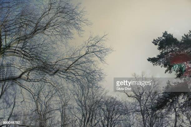 Double Exposure of tree tops in winter