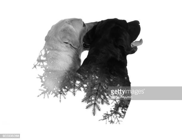 Double exposure of two dogs and a tree branches.