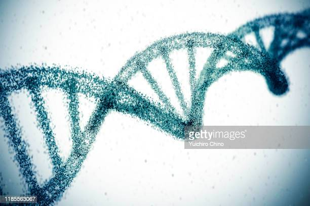 double helix dna model - scientificsubjects stock pictures, royalty-free photos & images