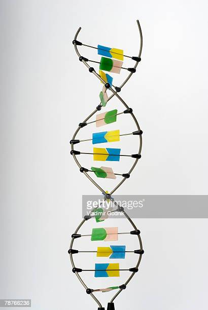 A double helix on a white background