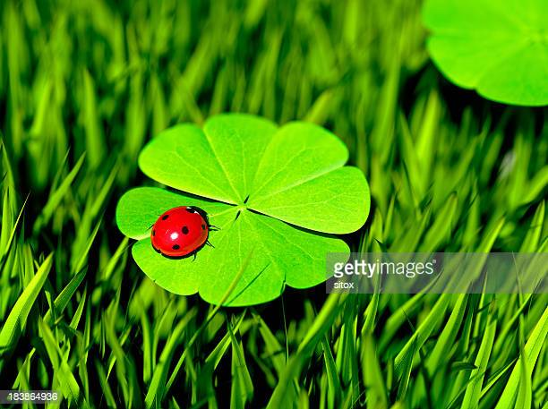 double luck - ladybug stock pictures, royalty-free photos & images