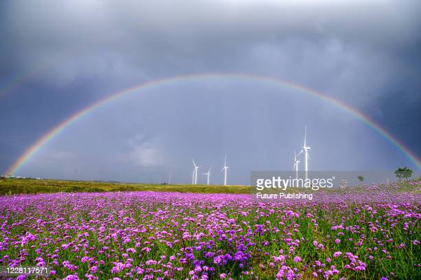 Double rainbow after rain above the sea of flowers. Guiyang City, Guizhou Province, China, August 19, 2020.- PHOTOGRAPH BY Costfoto / Barcroft...